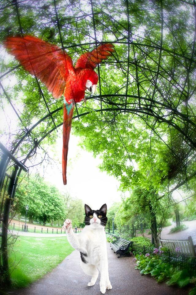 Kitty Fantasy