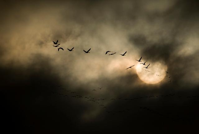 Platte River  Sandhill Cranes