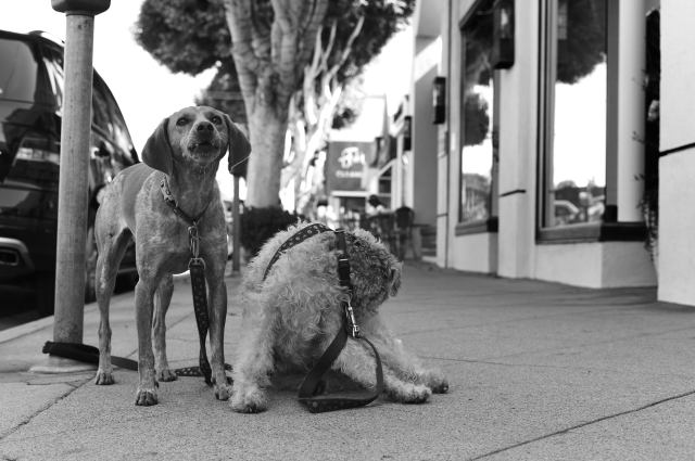 Santa Monica. 2 dogs. A touch of Elliott Erwitt.  @Simon Puschmann