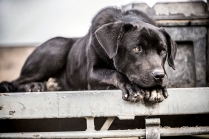 "©Tadd Myers - Communication Arts Photo Annual Award/Rangefinder Award - ""New Zealand Sheep Dogs"""