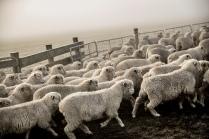 "©Tadd Myers - American Advertising Federation - Gold Award - ""New Zealand Sheep Farm Series"""