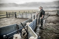 "©Tadd Myers - American Advertising Federation - Gold Award - ""New Zealand Sheep Farm Series"""