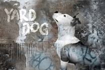 "©Alicia Buelow - ""Yard Dog Productions"" Identify Image"