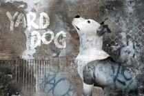 "©Alicia Buelow - ""Yard Dog Productions"" Identify Image"