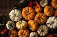 """Pumpkins and Gourds"" ©Studio Caswell"