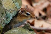 """""""Autumn Squirrel"""" ©Whitney Lane"""