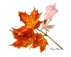 """""""Sugar Maple Leaf"""" ©Lyn Alice"""
