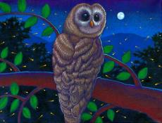 """Spotted Owl with Fireflies"" ©Ray-Mel Cornelius"
