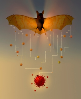 """Bats/Virus"" Illustrator ©Richard Borge"